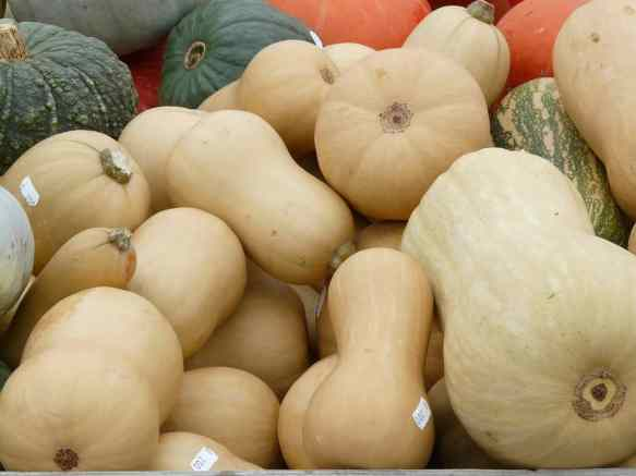 high-value vegetables-musky-winter-squashes