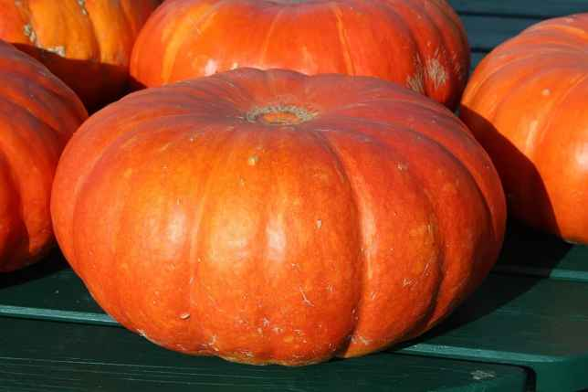 high-value vegetables -pumpkins-
