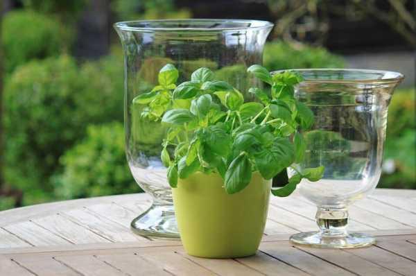 Planting vegetables for beginners