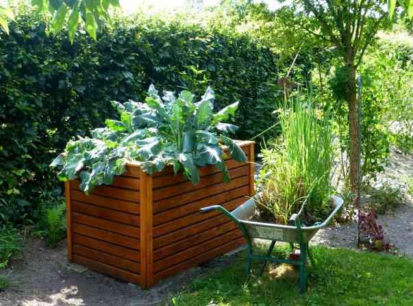 Planting vegetables in raised beds