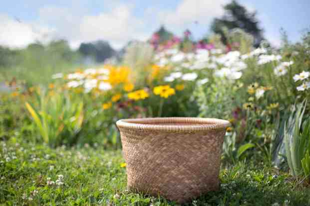 7 Natural Ways to Kill Weeds 1 (1)
