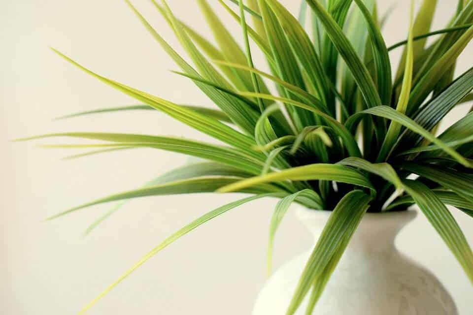 Recommended gardening resources in indoor gardening