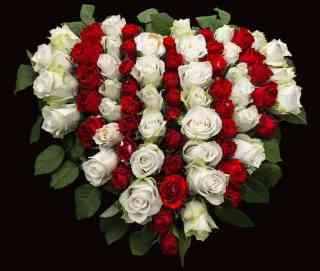 Rose flower business in kenya