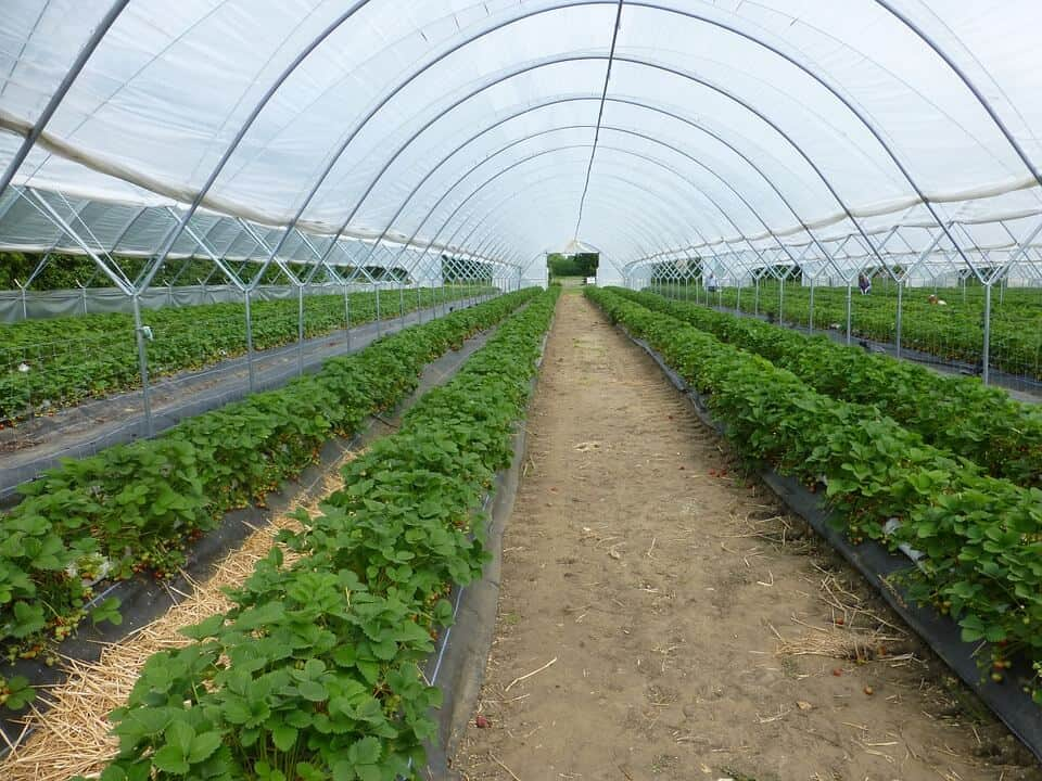 Here's Why Greenhouse Farming Is Your Only Option