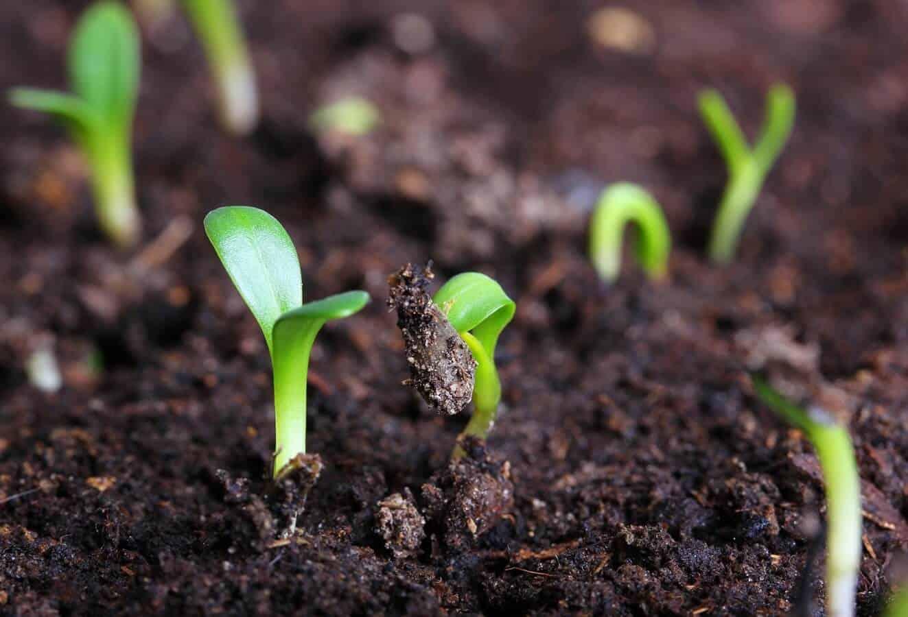 Organic farming tips