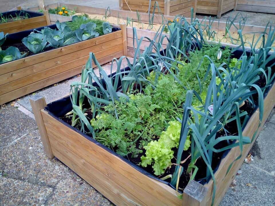 Urban farming for beginners