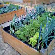 Urban farming for beginners