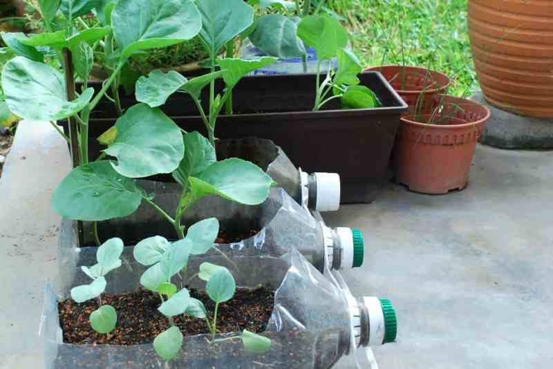 Easiest vegetables to grow kale