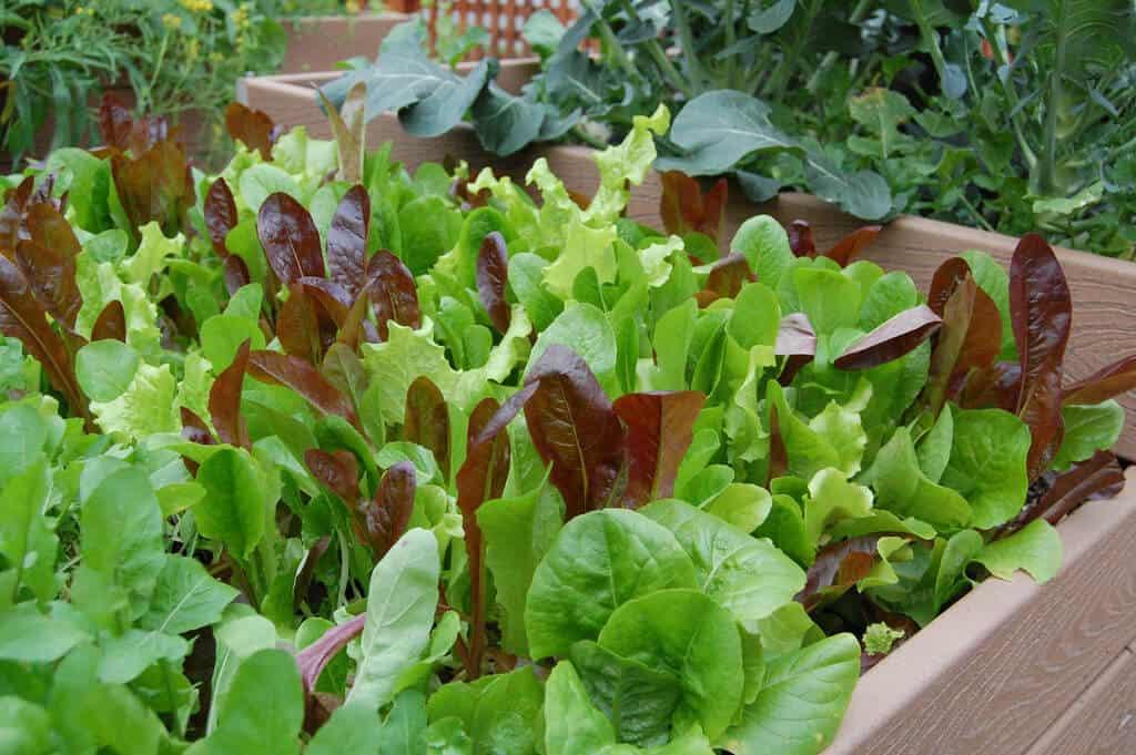Easiest vegetables to grow