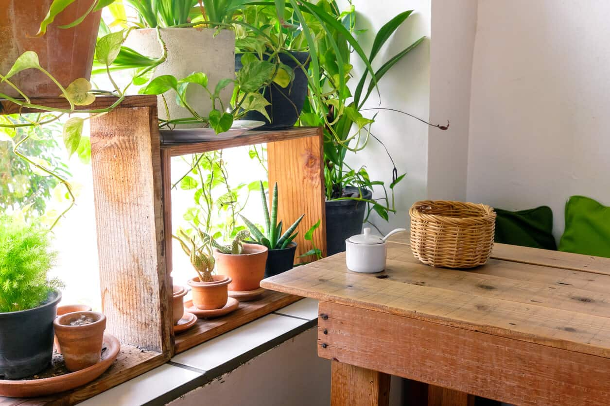Houseplants for Improving Indoor Air Quality