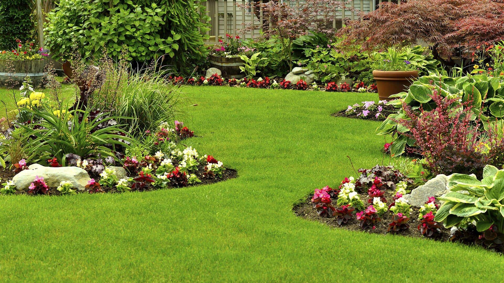 effective lawn care tips
