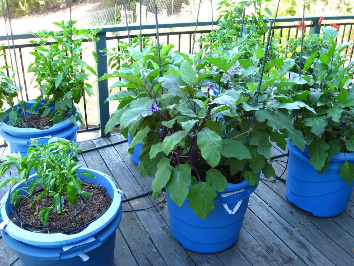 12 best vegetables for container gardening plus bonus tips hort zone. Black Bedroom Furniture Sets. Home Design Ideas
