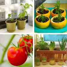Vegetable Gardening: Remarkable Hacks for Growing Vegetables at Home