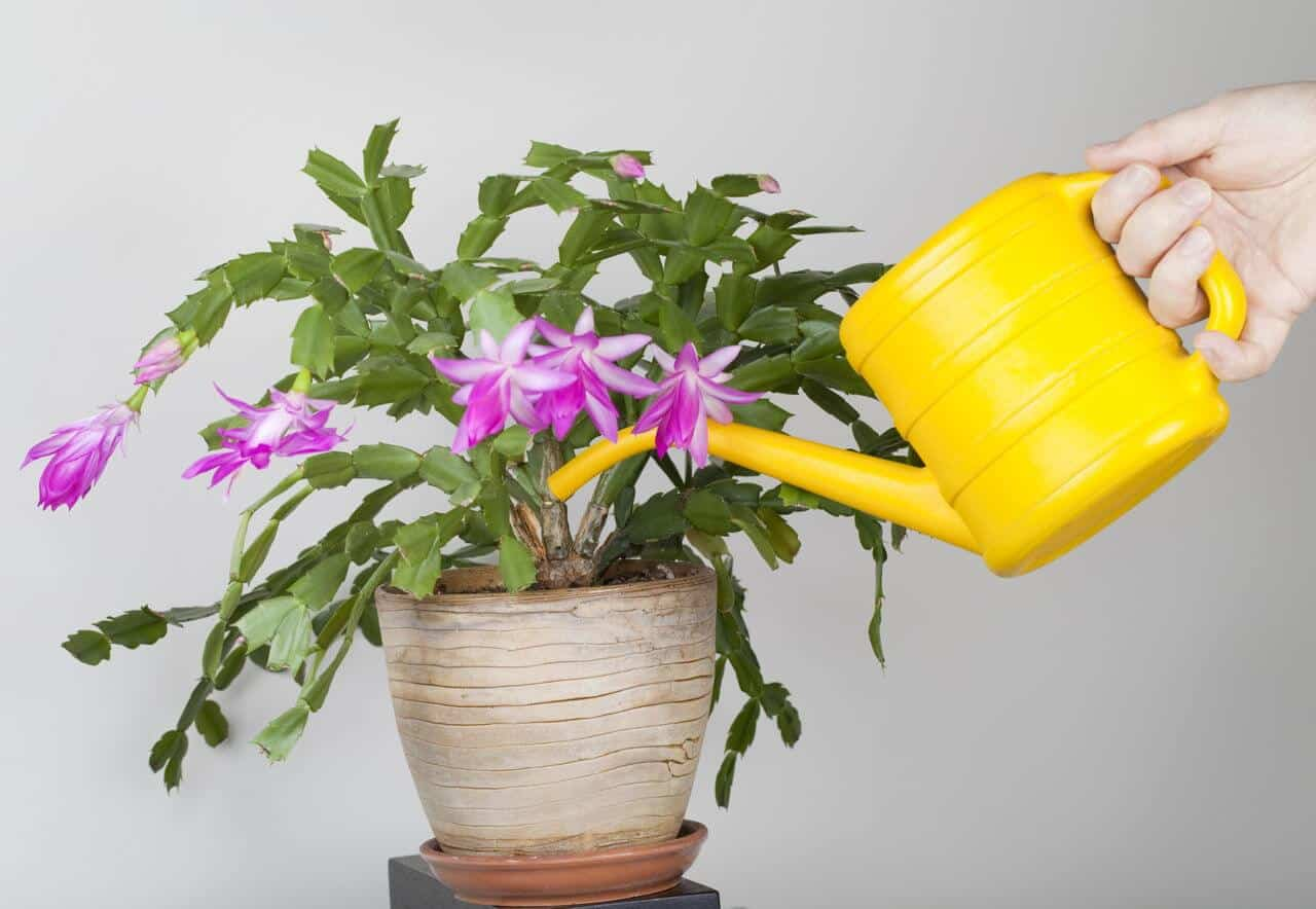 How to Water Potted Plants and Keep them Happy