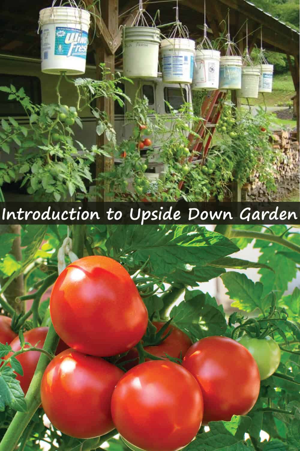 Introduction to Upside Down Gardening