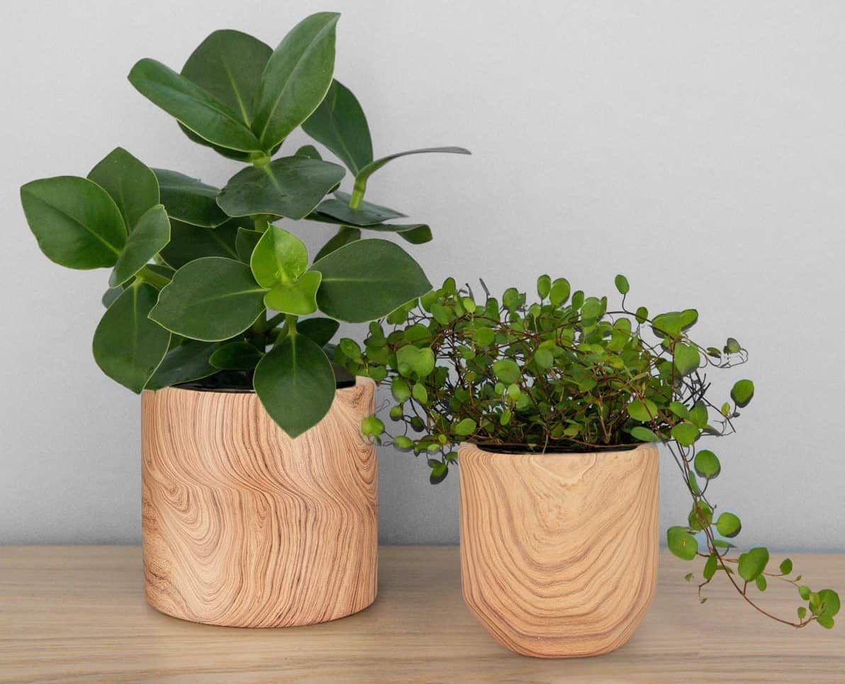 13 Best Indoor Pot Planters For Home Decoration Hort Zone