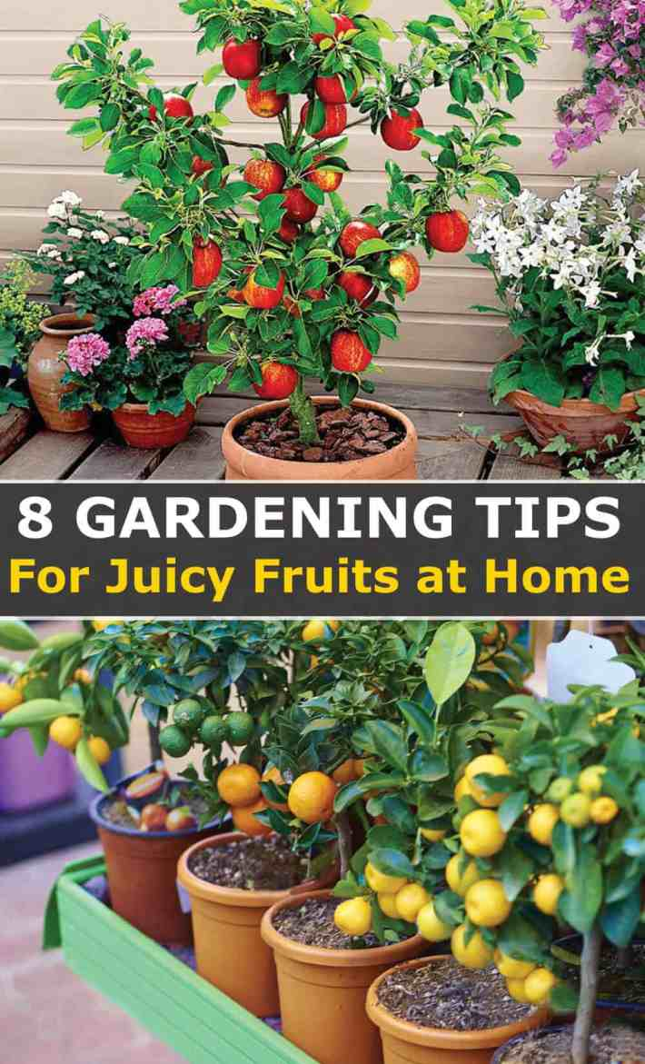 Easy Fruit Gardening Tips for Juicy fruits