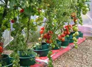 Best Soil For Tomatoes In Pots