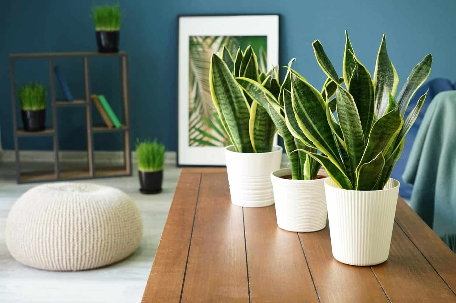 Which is the Best Way of Propagating Snake Plant?