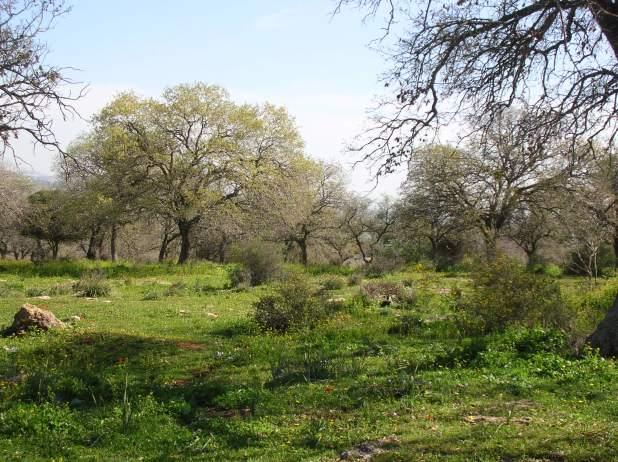 יער אלונים