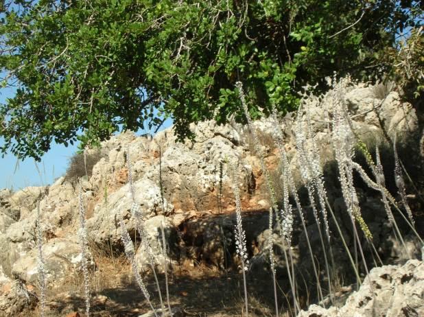 יער החצבים בהר השאבי