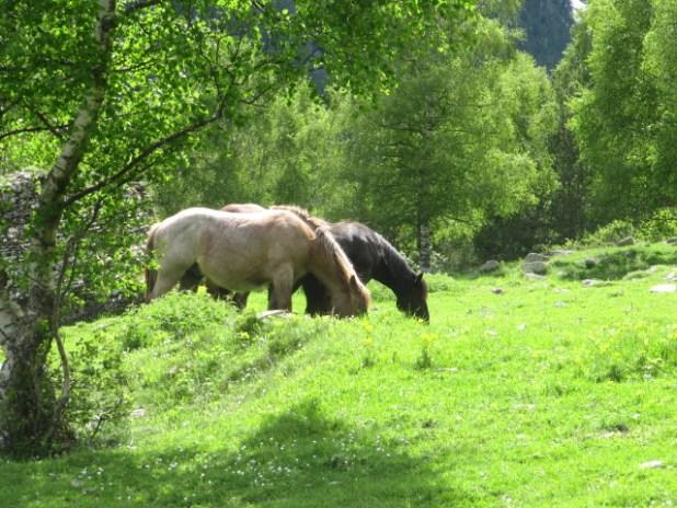 סוסים ב- Aiguestortes