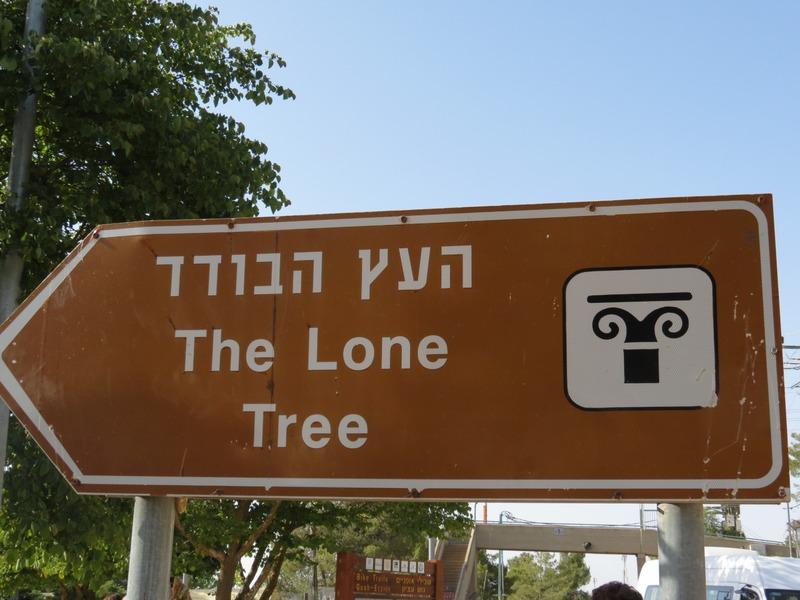 העץ הבודד - האלון הבודד