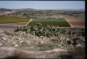 Al-Dawayima Amatzya