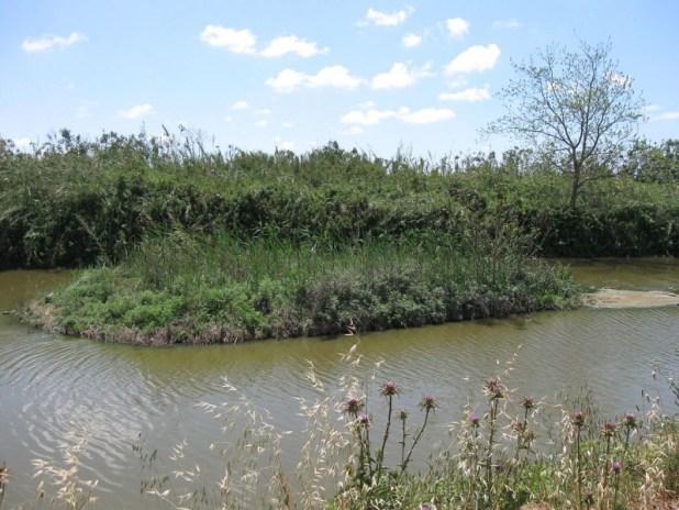 אי מלאכותי שהוקם בסמוך למפגש הנחל עם נחל שכם, ומשמש את בעלי החיים בנחל צילום: Ori~