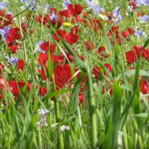 פרחי נחל ירמוך