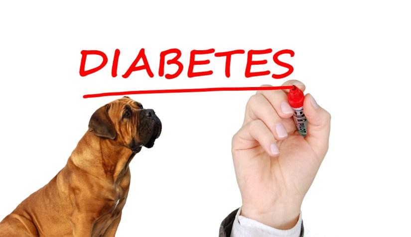 Resultado de imagem para diabetes canina