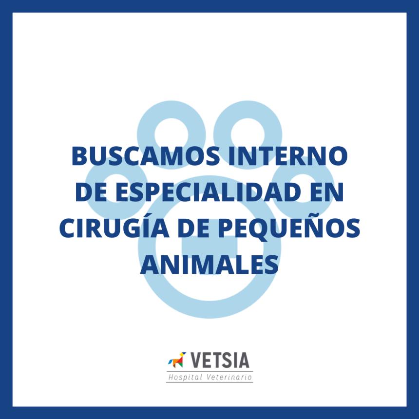 VETSIA Hospital Veterinario busca interno en cirugía de pequeños animales