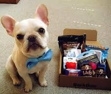 presents and Bulldogs