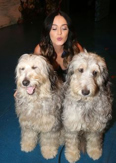 Katy Perry (2)