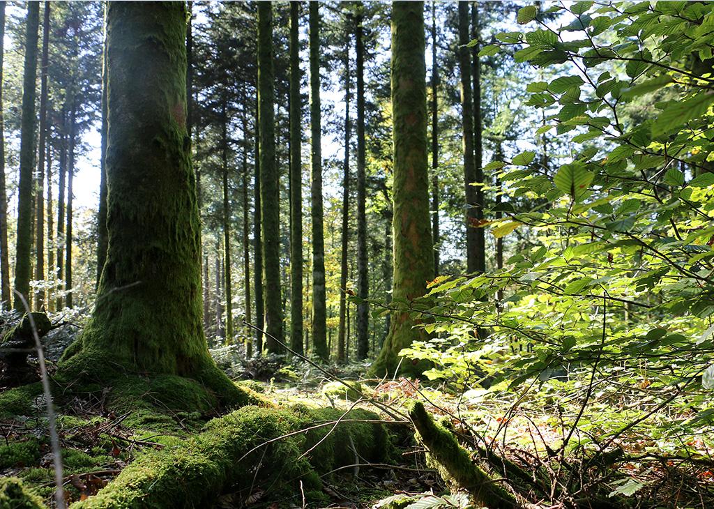 Sous bois du Morvan