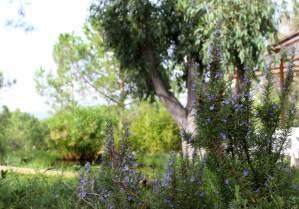 natura_isola_elba