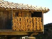 Riestras de maíz en hórreo (Cabranes