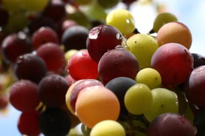Vinos Castellón