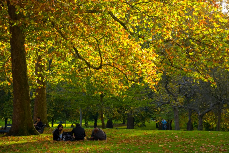 Colorful leaves in London's Green Park on a beautiful fall day.