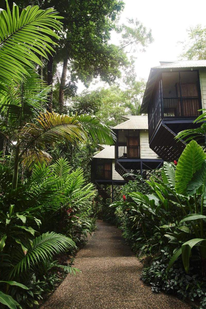 Canopies line the road with lush dense foliage all around.
