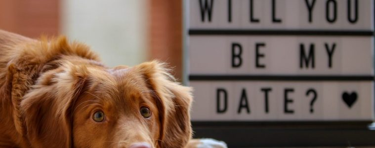 "Dog with head on floor and ""will you be my date?"" sign in background."