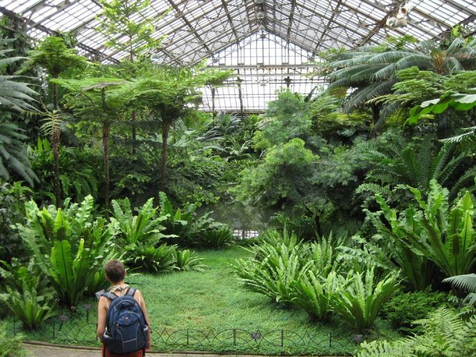 Visitor looks on at all the greenery in the greenhouse of the Garfield Park Conservatory.