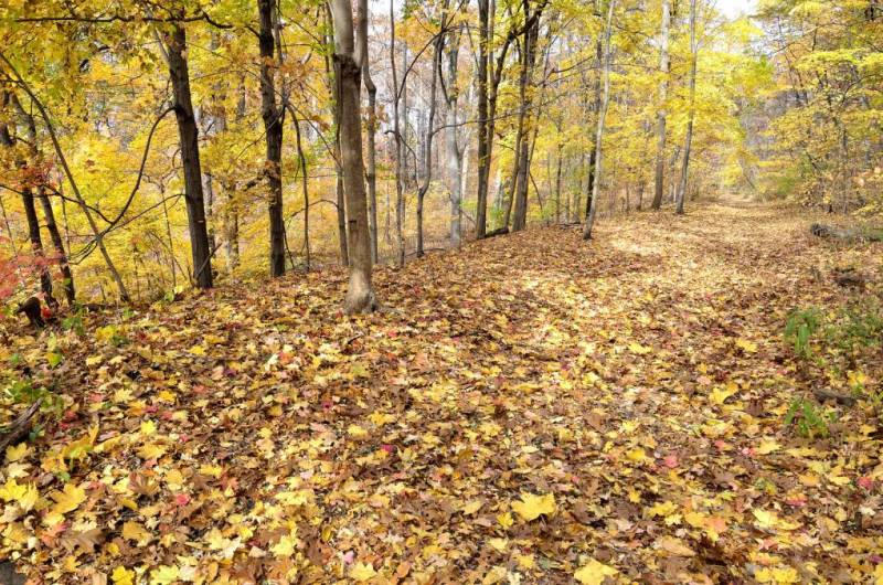 Fall is in full force as yellow and orange leaves decorate the ground in in Van Cortlandt Park, Bronx, NYC.