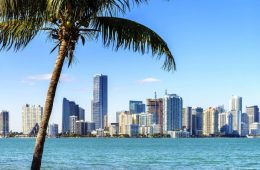 Miami skyline and palm tree against gorgeous clear blue sky backdrop.