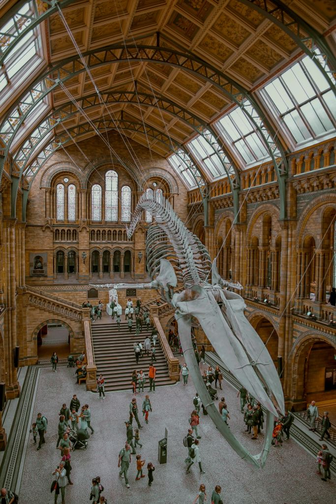 A replica dinosaur skeleton hangs prominently at London's Victoria and Albert Museum.