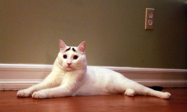 Kucing ini Punya Alis Mata Seperti Manusia