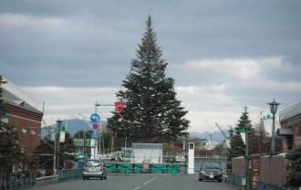クリスマスツリー到着