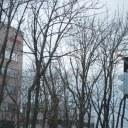 冬の装いの街路樹