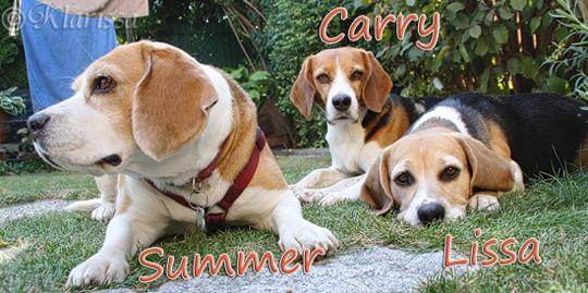 Meine Mädels mit Besucherbeaglechen Summer