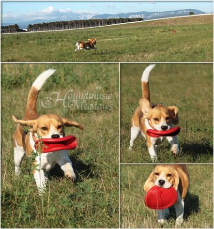 Dana & ihr rotes Frisbee, September 2015
